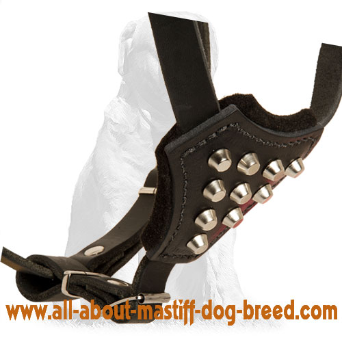 Studded Leather Dog Harness for Puppies and Small Breeds