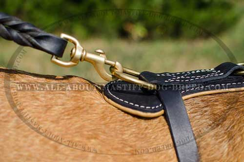 Reliable leather     dog harness with brass fittings