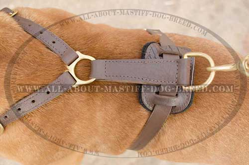 Attrective leather harness with brass fittings