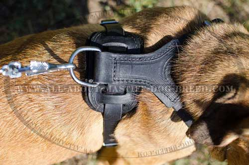 Durable leather dog equipped with strong D-ring