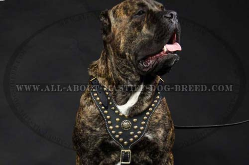 Mastiff Dog Harness Custom Leather