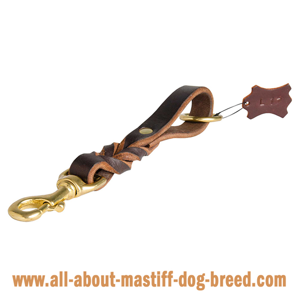 Braided leather leash for walks with your Mastiff