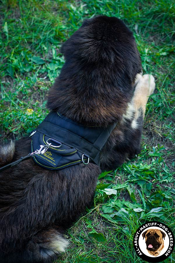 Nylon Mastiff harness with strong D-rings