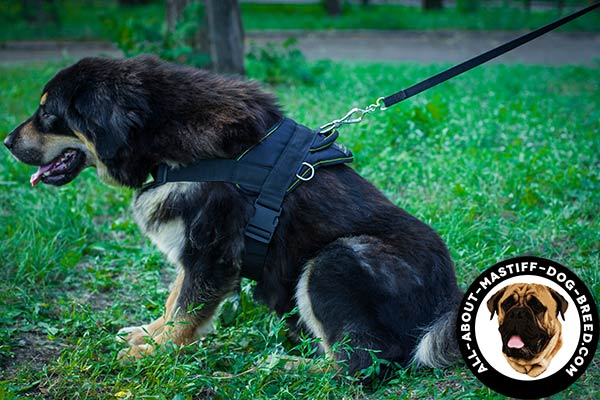 Extra durable Mastiff harness made of nylon
