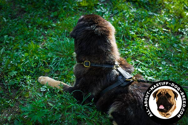 Anti-rubbing leather Mastiff harness