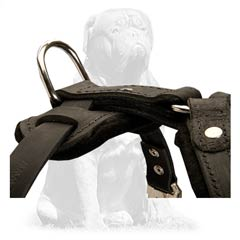 Mastiff harness for easy leash attachment with D-ring