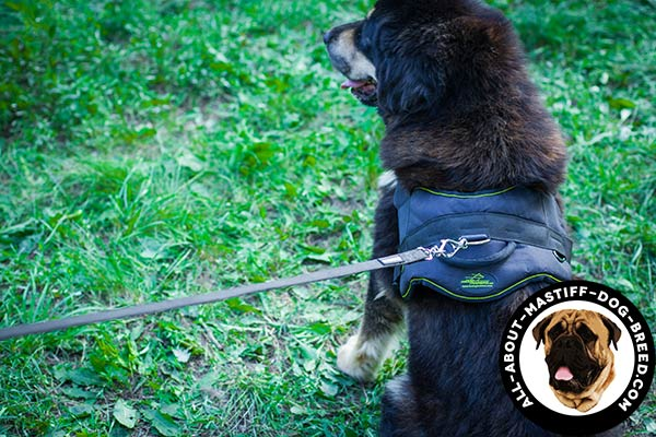 Mastiff nylon harness with strong hardware