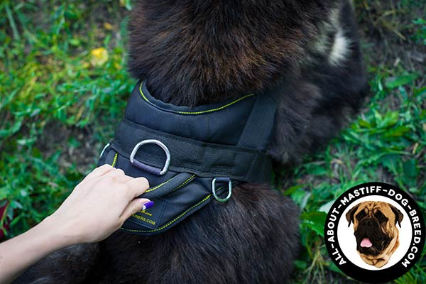 Mastiff harness with be-in-control handle