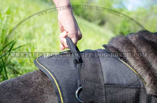 Mastino Napoletano Harness with Handle for Easy walking