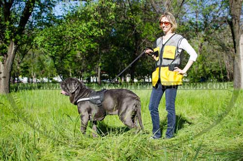 Mastino Napoletano Harness with Patches for Daily Training