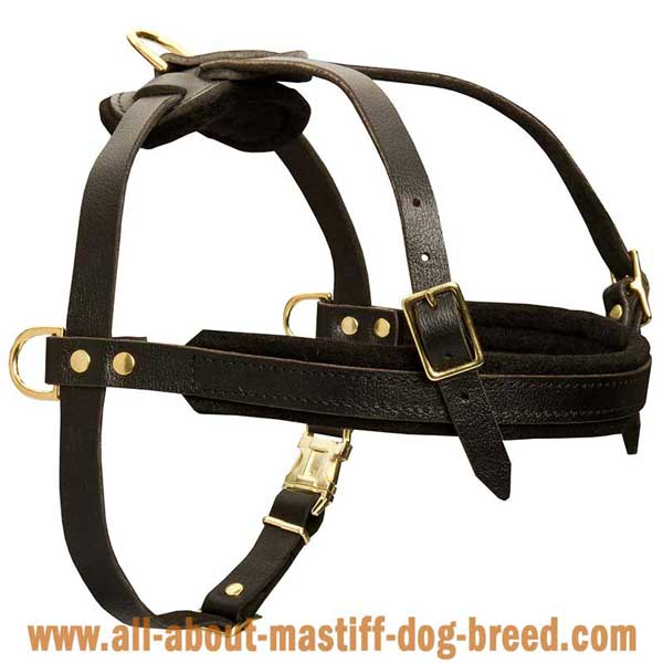 Neopolitan Mastiff leather harness softly padded inside