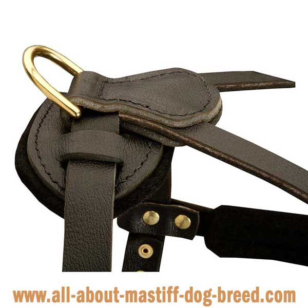Neopolitan Mastiff  leather harness with brass fittings