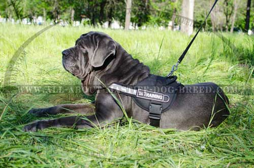 Mastino Napoletano Nylon Harness for Daily Training