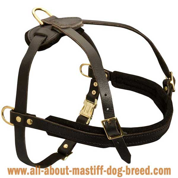 Pyrenean Mastiff leather harness made of genuine leather