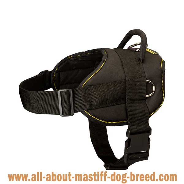 Lightweight Pyrenenan Mastiff harness with additional D-rings