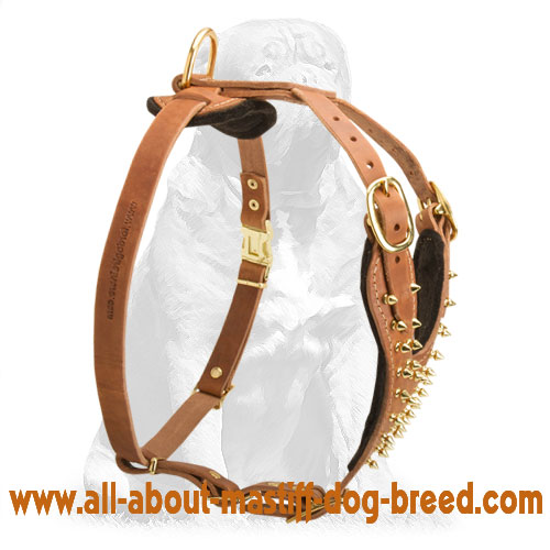 Tan leather dog harness with brass fittings
