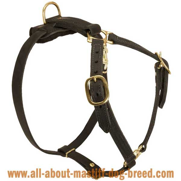Tibetan Mastiff Dog Harness Leather with 4 Adjustable Straps