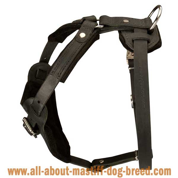 Tibetan Mastiff Leather Harness with Felt Padded Chest
