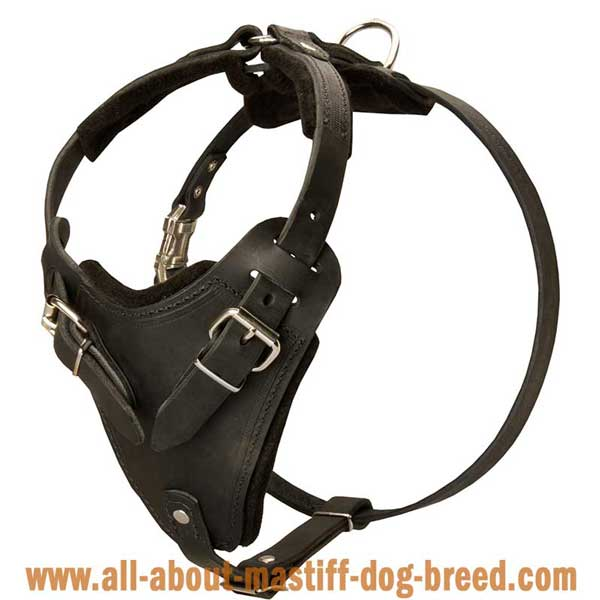 Tibetan Mastiff Leather Harness for Different Kinds of Training