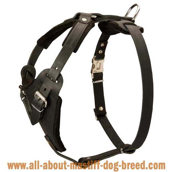 Tibetan Mastiff Leather Harness Adjustable in 4 Ways