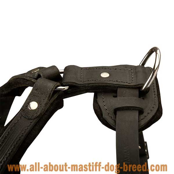 Tibetan Mastiff Leather Harness with Rust and Corrosion Resistant Hardware