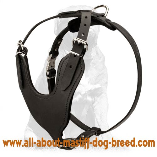 Leather dog harness with nickel plated hardware