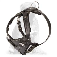 Totally handmade Mastiff harness for agitation/attack work