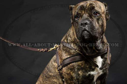 Leather Dog Harness for Mastiff Training