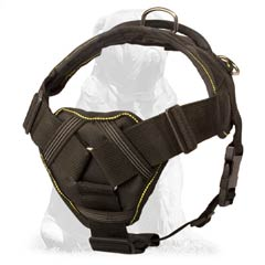 Nylon harness for Mastiff breed