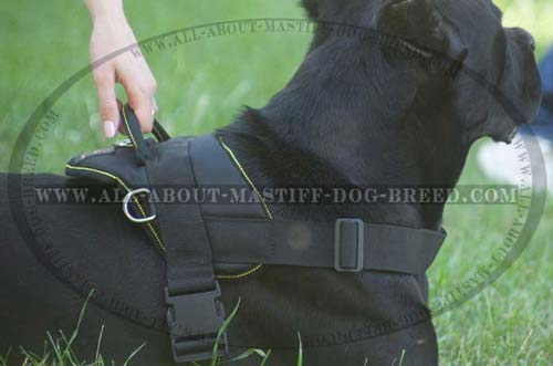 Mastiff dog harness for many kinds of training