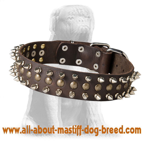 Excellent Spiked and Studded Mastiff Leather Collar
