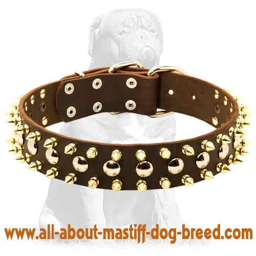 Brown Leather Spiked Studded Dog Collar for Mastiff