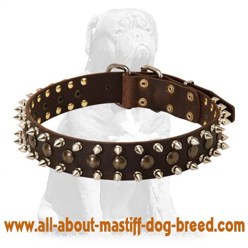 Comfortable Mastiff Leather Dog Collar with Spikes and Studs