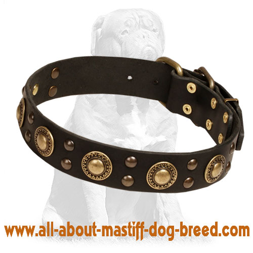 Mastiff Leather Dog Collar with Brass Decorations