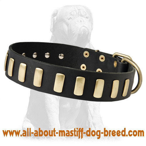 Gorgeous Wide Leather Dog Collar With Plates for Mastiffs