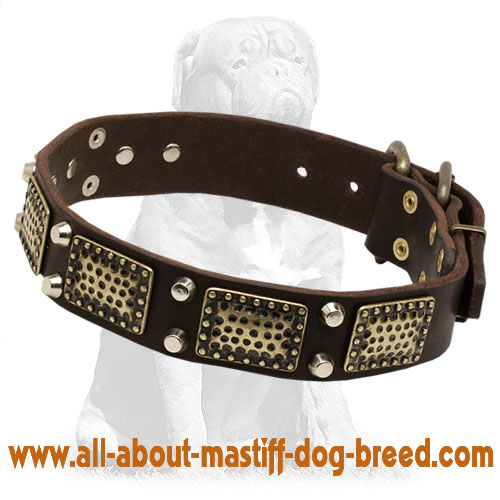 Mastiff Leather Collar with Studs and Vintage Plates