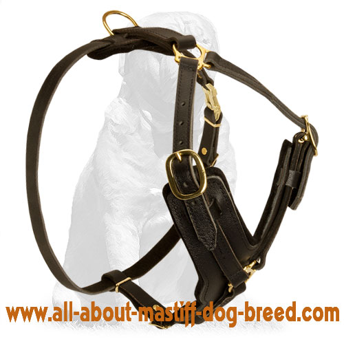 Y-Shaped American Bandogge Dog Harness for Attack/Agitation Training
