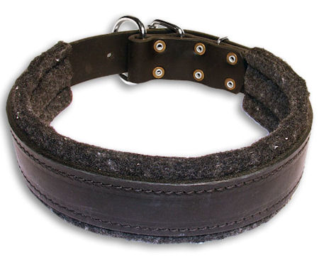 Padded Black collar 24'' for Mastiff /24 inch dog collar - C24