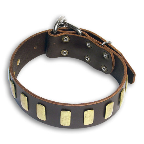 Leather Brown Collar for Mastiff with Decorations