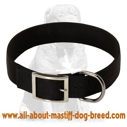 Nylon Dog Collar- 2 Ply Nylon with Nickel Plated Hardware