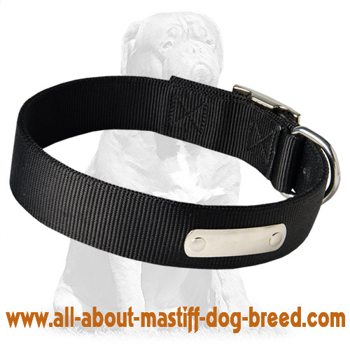 Trendy Mastiff collar with ID-tag