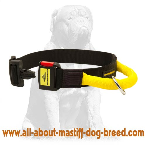 Extra strong nylon Mastiff collar with handle
