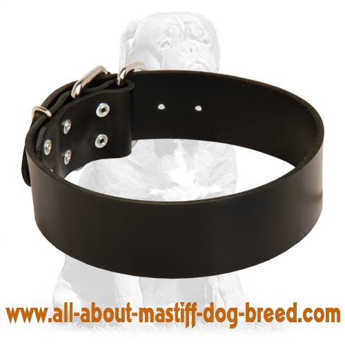Extra Wide Leather Collar for Mastiff