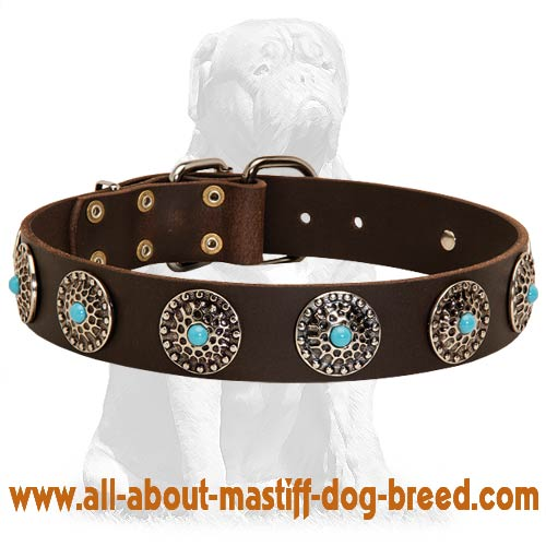 Stunning Mastiff collar with blue stones