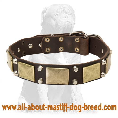 Mastiff collar with brass plates +2 nickel pyramids