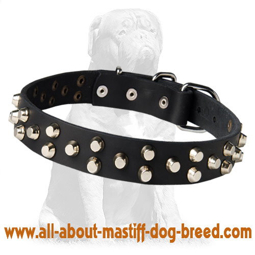 Fashionable handmade pyramid studded collar for Mastiff