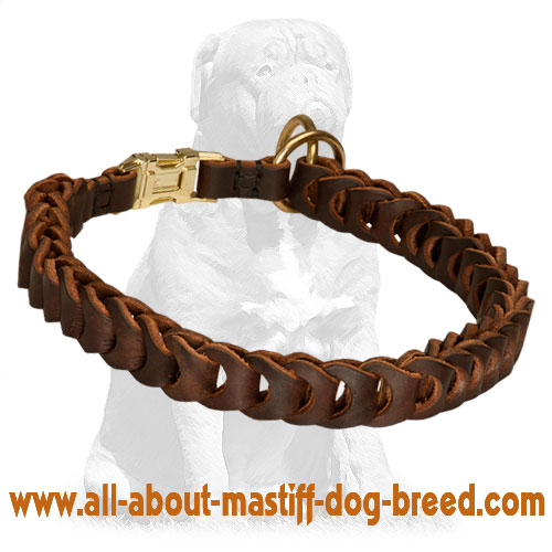 Braided Leather Choke Collar for Mastiff