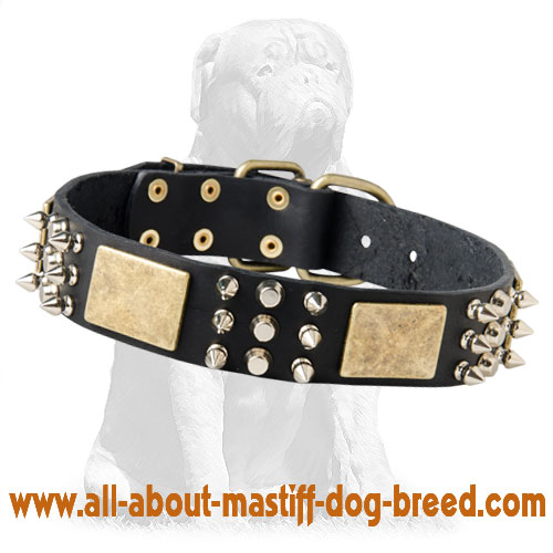 Perfect Spiked Leather Dog Collar with Brass Massive Plates&Spikes