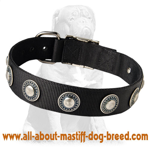 Nylon Mastiff collar with silver conchos