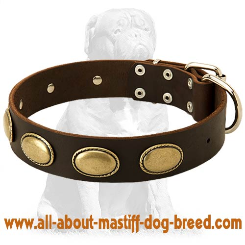 Gorgeous vintage Mastiff leather collar